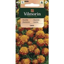 Aksamitka rozpierzchła pełna pomarańczowo-mahoniowa Laura 1g Vilmorin