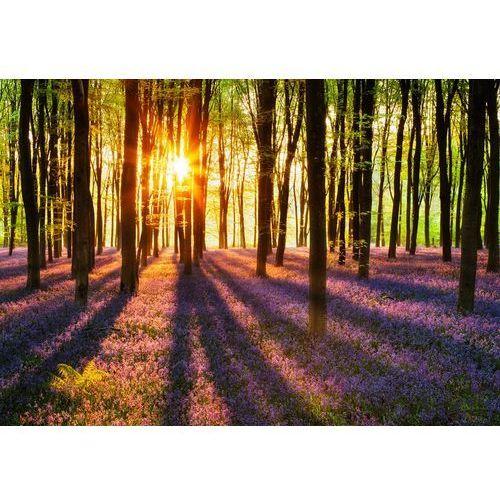 Fototapety, Fototapeta Woodland at Dawn 952