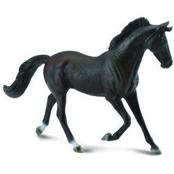 Klacz thoroughbred maści czarnej