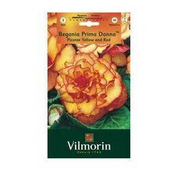 Begonia PICOTEE 2szt. VILMORIN