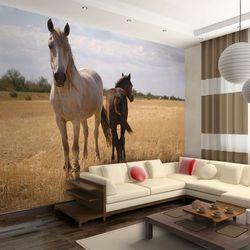 Fototapeta na flizelinie na ścianę HD - Koń i źrebię 200 szer. 154 wys.