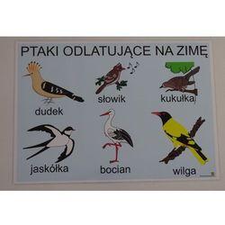 Ptaki odlatujące na zimę- plansza demonstracyjna