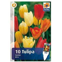 Tulipany Fosteriana mix