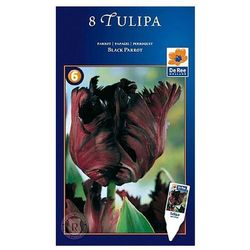 Tulipany Black Parrot