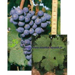Sadzonka winorośli Carmenere