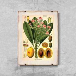 Plakat vintage do salonu Plakat vintage do salonu Botaniczny nadruk Apocyaceae