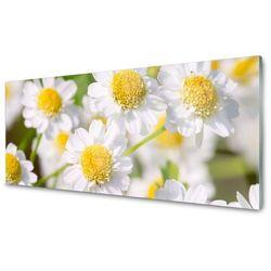 Obraz Akrylowy Kwiaty Stokrotka Natura