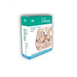 Anatomia Sobotta Flashcards Neuroanatomia. Angielskie mianownictwo anatomiczne (opr. kartonowa)