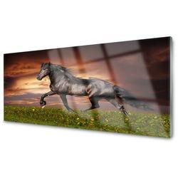 Obraz na Szkle Czarny Koń Łąka Zwierzęta