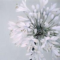 Serwetki papierowe, Serwetki papierowe Biały Kwiat 33x33 20szt PELIKAN - biały kwiat