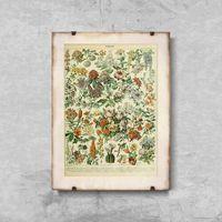 Plakaty, Plakat retro do salonu Plakat retro do salonu Kwiaty Adolphe Millot