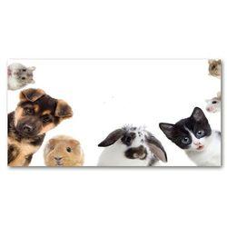 Foto-obraz szkło akryl Zwierzęta domowe