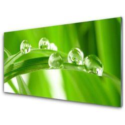 Panel Kuchenny Liście Natura Roślina