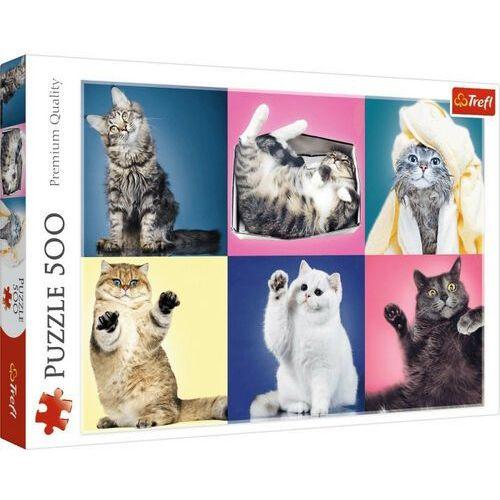 Puzzle, Puzzle Kociaki 500 elementów