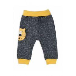 Spodnie dresowe szare lion 5m39aw marki Nicol